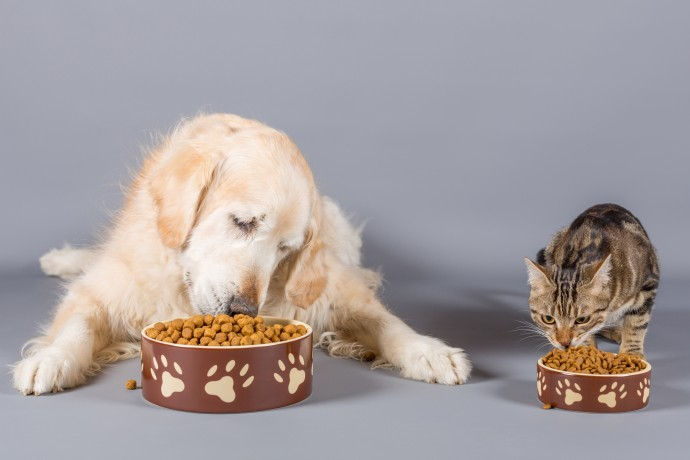 Dog and cat eating their pet food next to each other